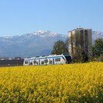 """""""Il treno attraversa un fiume di fiori"""""""