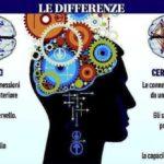 I cervelli diversi degli autistici più maschi dei maschi?